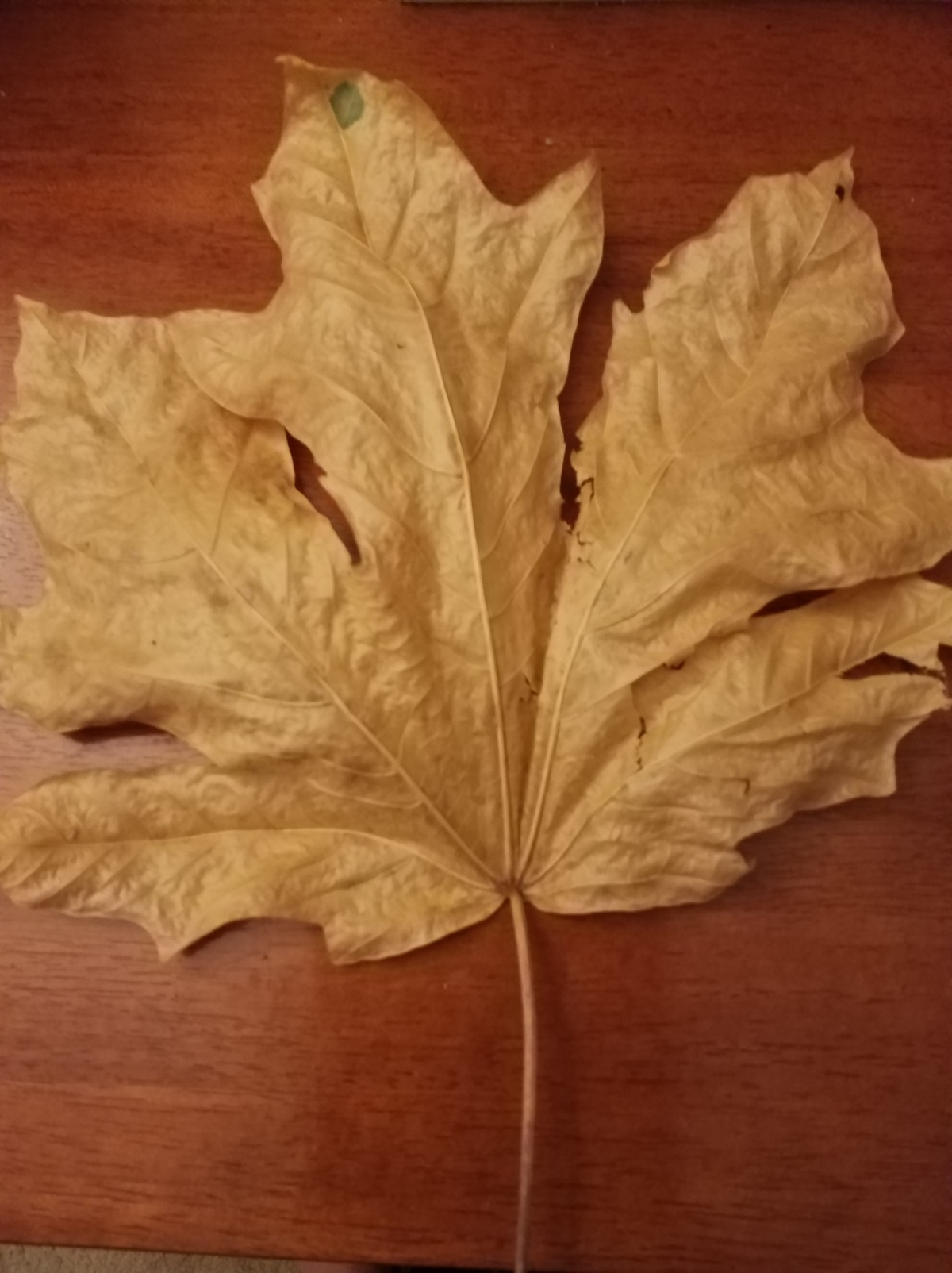 A leaf left in a study